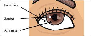 zunanji deli ocesa Kako oko deluje